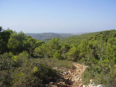 Ścieżka na Górze Karmel